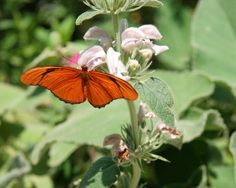 Butterfly on Flower 15,Child's Photo, 5x7 Photo, 11x14 Photo, 8x10 Photo