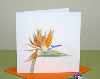 Botanical Card-Bird of Paradise illustration-Strelitzia print-Flower Greetings Card-Birthday Card-Botanical Watercolour-Exotic Flower print
