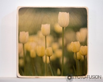8x8 Yellow Tulips: Photo Transfer Wall Art on Wood square, Flower Photography - In stock, fast ship next day!