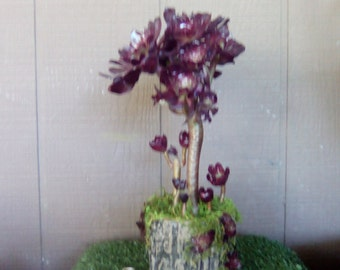 Purple Succulent Plants Succulent Clippings Succulent Starts Tree