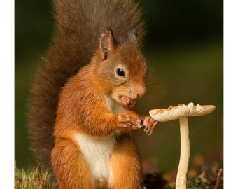 Red Squirrel - Al Fresco Dining