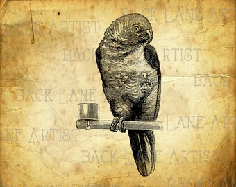 Parrot, Cockatoo, Psittacines Bird with Glass of Wine Clipart Illustration Instant Download PNG JPG Digi Line Art Image Drawing L175