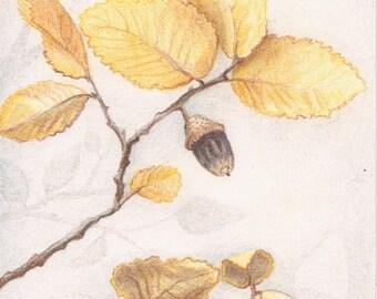 "Original Colored Pencil Drawing - Fall Wall Art - Autumn Harvest Home Decor - 4"" x 6"""