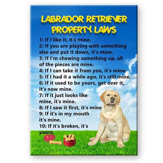 Labrador Retriever Property Laws Fridge Magnet (Yellow)