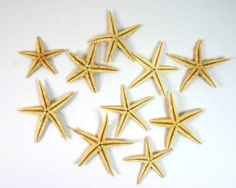 10 Natural Starfish Craft Starfish Dried Starfish Nautical Crafts Mermaid Party Wedding Decor Craft Supplies Scrapbooking