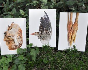 Frozen Animal Taxidermy Fine Art Photography Prints - Surprise Photo - 25x18 cm