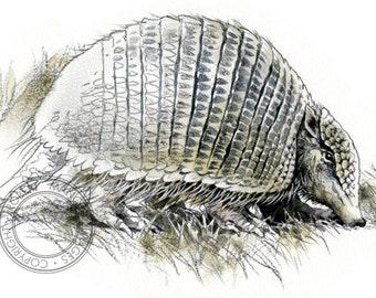 Armadillo watercolour - wildlife art - nature print of original artwork - A5