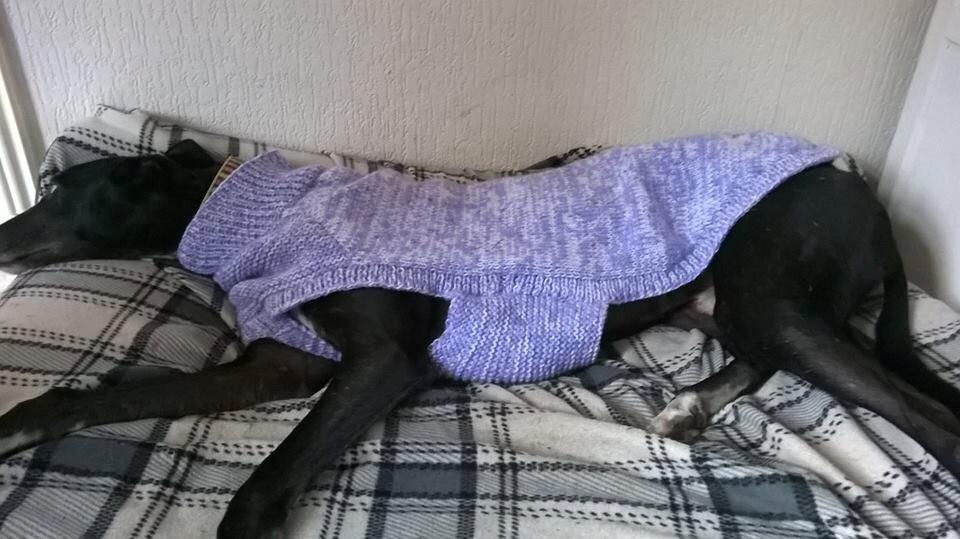 Greyhound Sweater Knitting Pattern FREE UK postage