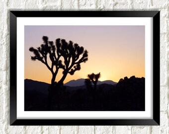 JOSHUA TREE PRINT: Desert Sunset Photo