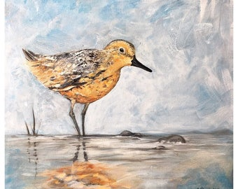 Tidal Forage Red Knot - archival print by Ericka O'Rourke - multiple sizes available