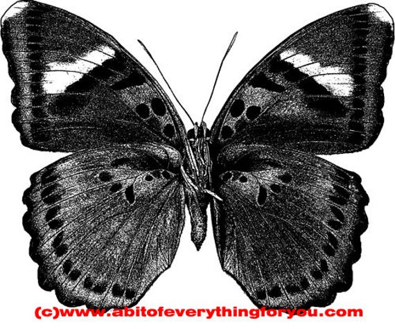 butterfly insect bug Entomology printable art clipart png download digital image graphics nature black and white artwork