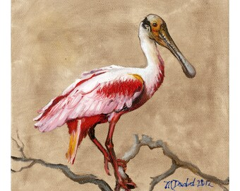 Rose Colored Beauty - 6 x 6 inch original oil painting of a roseatte spoonbill by Martha Dodd