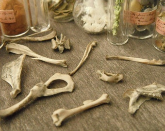Miniature Bones