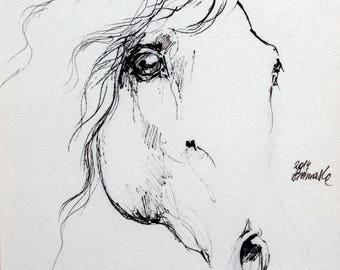 Arabian horse, equine art, horse drawing, equestrian, cheval, horse portrait, original pen drawing