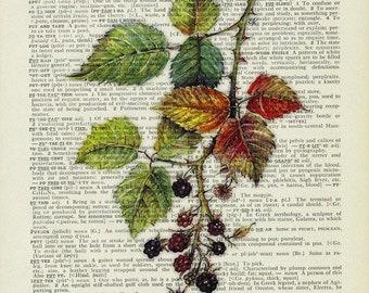 blackberry painting print