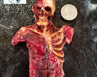 Skinned torso magnet