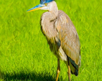 Blue Heron Bird Oil On Canvas Print