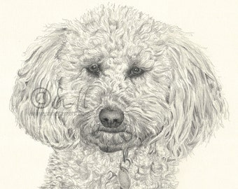 127 Small Labradoodle card