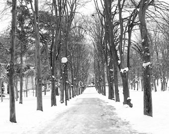 Paris Photography, Snowy Path in Paris, Nature Photography, snowy landscape, winter photography, black and white art, snow in Paris, France