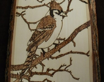 Blue Jay in Branches Woodburning