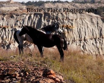 Stallion and Mare//North Dakota wild horses//horse decor// Wild Horse print// horse photography//Horse print//wildhorse art