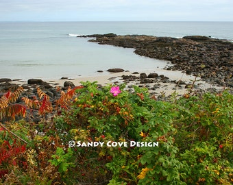 5 x 7 Greeting Card with Envelope - Last Rose of Summer, Marginal Way, Ogunquit, Maine, Ocean, Rocks, Wild Roses, Coast, Seashore
