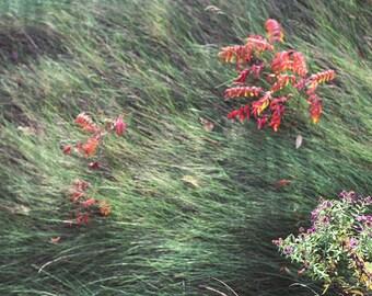 Grassy Scene