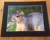 Squirrelling Away - Wildl...