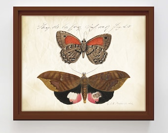 Vintage Butterflies Print Antique Butterflies Poster Printable Entomology Wall Art Natural History Insect Print Home Decor Digital Download