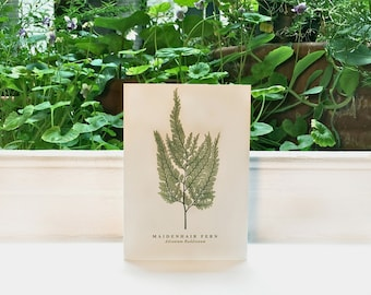 Maidenhair Fern: Greeting Card