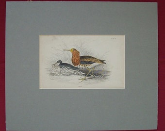 Antique Hand Coloured Engraving Ruff