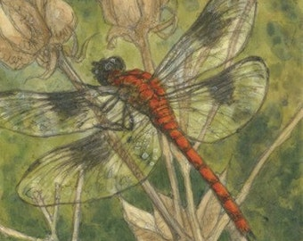 Dragonfly Matted/Signed Giclee  Print
