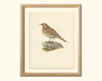 Vintage Bird Print, Tree Pipit, Singing Titlark, Field, Meadow Lark, 8 x 10, Book Page, Ornithology, Natural History, DEM/1959/71