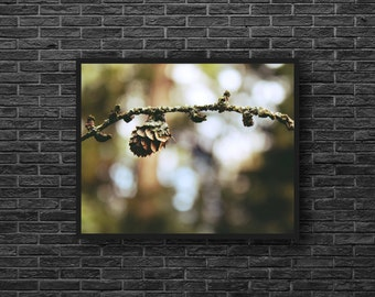 Pine Cone Photo - Branch Photo - Nature Photo - Brown and Green - Forest Photo Print - Photo Print - Forest Wall Art - Forest Wall Decor