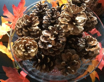 18 Michigan Pinecones Glossy Finish