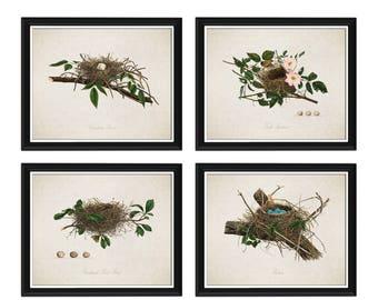 Vintage Bird Nests Print Set - Art - Vintage Birds - Wall Art - Bird Nest - Bird Eggs - Art Illustration - Birds Nest - Home Decor #C001