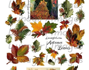 AUTUMN LEAVES digital collage sheet, Vintage images, Fall leaves, Victorian art woodland nature trees vintage Thanksgiving ephemera DOWNLOAD