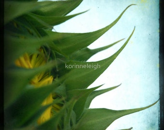 Smother me with Sunflowers - Photo Cards - Set of 5 Blank Greeting Cards, Flowers, Bright Yellow, Birthday, Summer, Summer