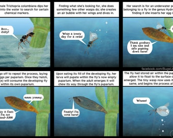 Weird Wasp Wednesday #6