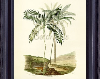 D'Orbigny Botanical Print Palmers Plate 3 Vintage 8x10 French Antique Art PALM TREES Cocos Coconut Morenia Animals MT0102