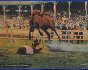 Cowboy Earl West Thrown from Bluebonnet Bucking Bronco Linen Postcard 1942