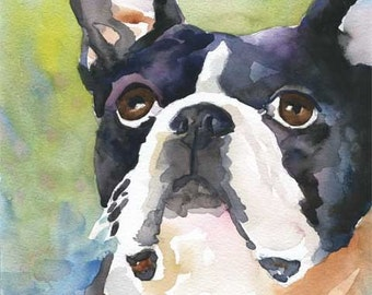 Boston Terrier Art Print of Original Watercolor Painting - 11x14 Dog Art