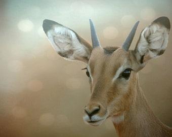 Photography Baby bambi