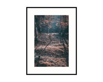 Golden Tree Print - Peak District Woodland Original Photograph Wall Art Decor