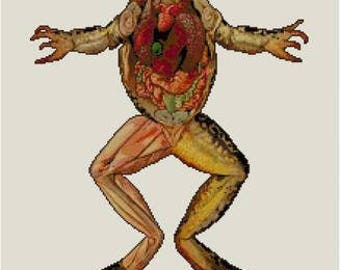 Frog Anatomy Dissection Cross stitch pattern PDF Biology