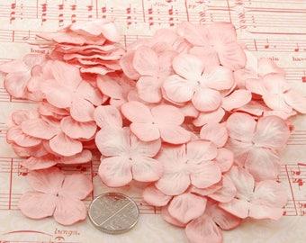Pink Blush Hydrangea Pbc167