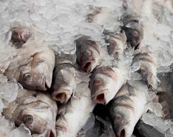 Photo Print - Fresh Fish, Fish Photos, Food Photos, Farmers Market, Fish Market