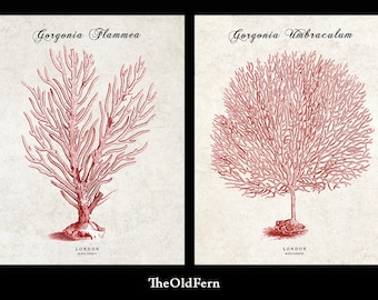 CORAL PRINTS, RED Coral, Coral Art, Coral Pictures, Beach Decor, Beach Art, Set of 2 Prints