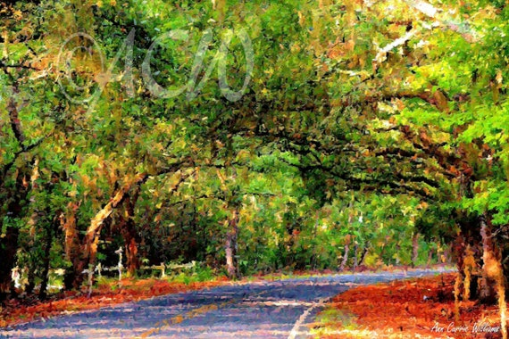 A Back Road on Edisto Island, South Carolina (canvas)