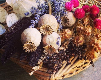 Dried Flower Seed Collection, Poppy Seeds, Money Plant Seed, Heirloom Flower Seeds, 5 Varieties Great for Dried Floral Craft Projects
